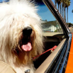 7 Pet Friendly Vacation Spots for 2020