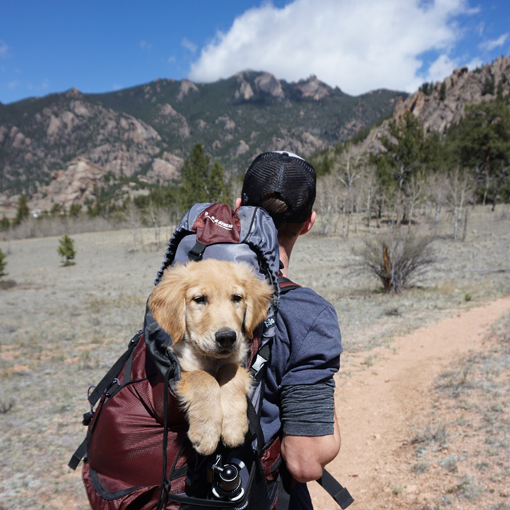 pet friendly vacations