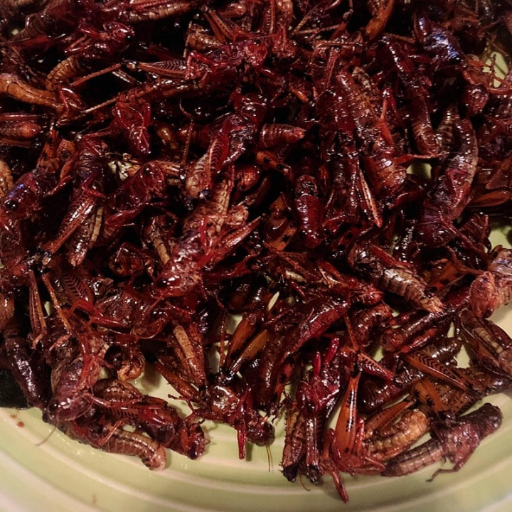 21 Most Exotic & Weird Foods In The World - Fried Grasshoppers